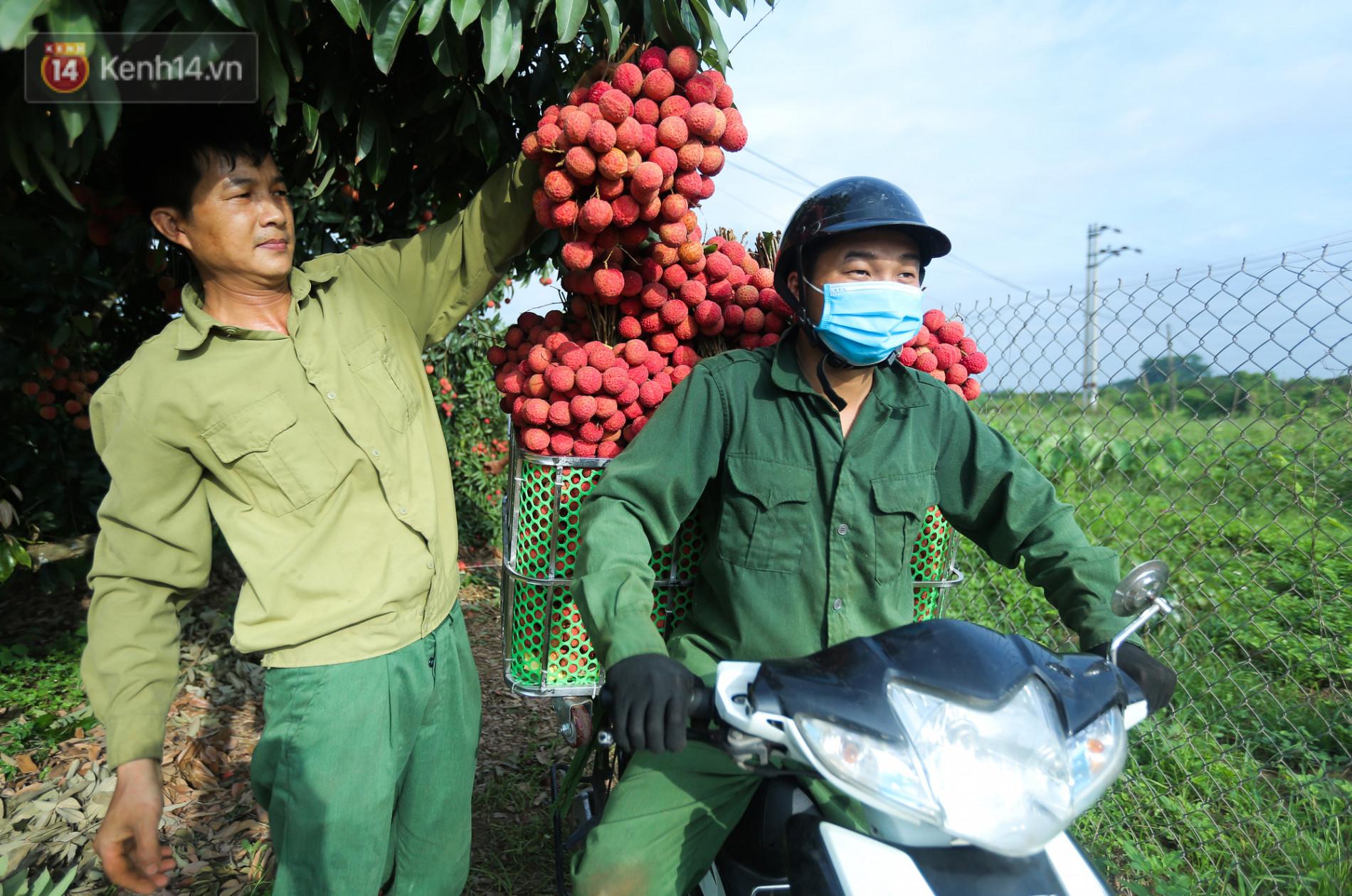 Ảnh: Nông dân Bắc Giang nối đuôi nhau chở vải thiều ra chợ, đường quê đỏ rực một màu - Ảnh 2.
