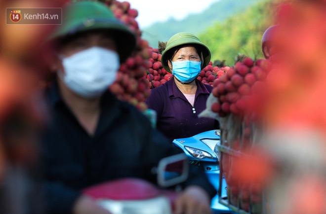 Ảnh: Nông dân Bắc Giang nối đuôi nhau chở vải thiều ra chợ, đường quê đỏ rực một màu