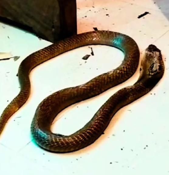 Chồng 2 lần thả rắn cắn chết vợ, hành động trước khi ra tay khiến ai nấy 'hãi hùng' Ảnh 2