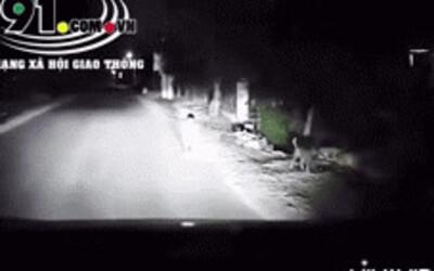 Clip: Tài xế thót tim khi bắt gặp bé trai 2 tuổi lang thang giữa đường lúc 1 giờ sáng