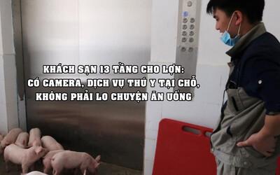 Trung Quốc xây khách sạn 13 tầng dành cho... lợn vì sợ bị nhiễm virus: Có dịch vụ thú y tại chỗ