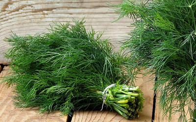 5 loại cây dễ trồng vừa làm thuốc vừa để ăn, chị em mua đảm bảo đáng tiền