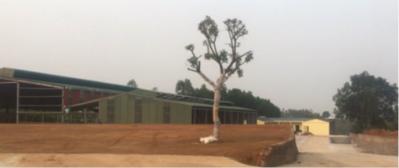 Phú Thọ: Ngang nhiên xây dựng nhà xưởng không phép trên đất rừng sản xuất