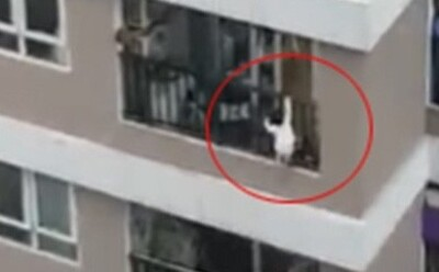 Chuyên gia Nhi khoa phân tích: Điểm rơi 'cực may mắn' của cháu bé ngã từ tầng 13