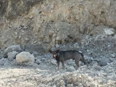 Đi theo chú chó hoang tới gần bãi rác, người đàn ông phát hiện tội ác kinh hoàng