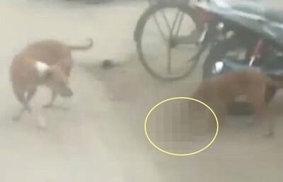 Kinh hoàng cảnh chó hoang tha bé gái sơ sinh đi lang thang trong bệnh viện