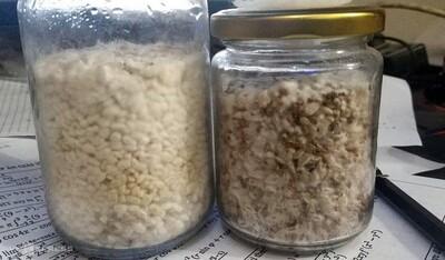 Đáng sợ ma túy dạng mới 'nấm thức thần' xuất hiện tại Hà Nội