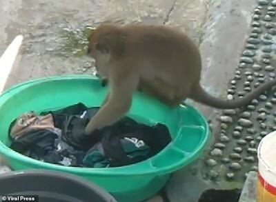 Chủ nhà há hốc mồm kinh ngạc sau khi phát hiện 'cô tiên' xuất hiện giặt giũ hộ mình