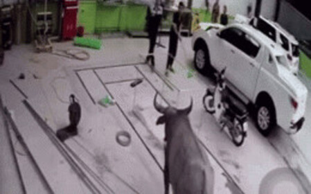 Clip: Trâu nổi điên lao vào gara ô tô ở Thái Nguyên 'cà khịa' khiến nhiều người chạy mất cả dép