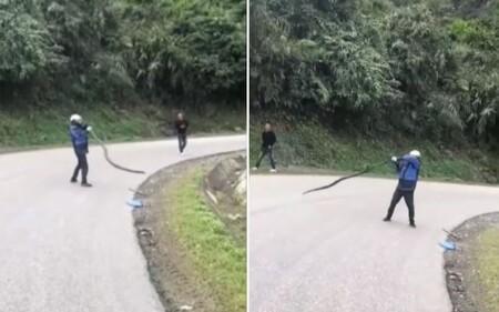 CLIP: Người đàn ông quay rắn hổ mang chúa gần 20 vòng, cận cảnh bóp cổ gây kinh sợ